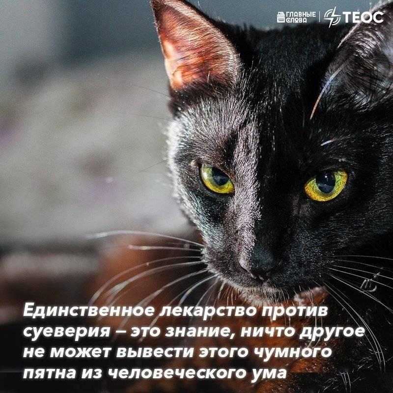 Примета если черная кошка перебежала дорогу