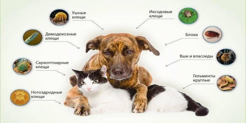 Собака кашляет: чем лечить и что дать в домашних условиях