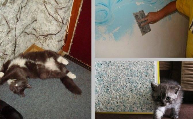 4 проверенных способа, как отучить кошку драть мебель и обои