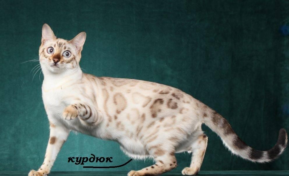 По каким причинам у кошки может обвиснуть живот? | мир кошек у кошки обвис живот — что могло стать причиной изменения внешнего вида питомца? | мир кошек