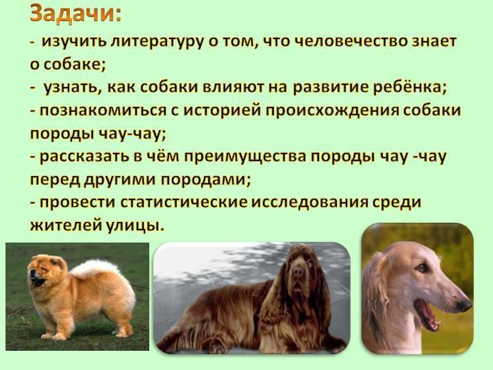 Первые собаки: когда игде?