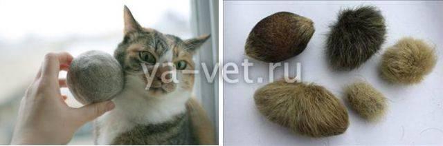 У кота рвотные позывы без рвоты: причины, что делать дома, когда обратиться к врачу