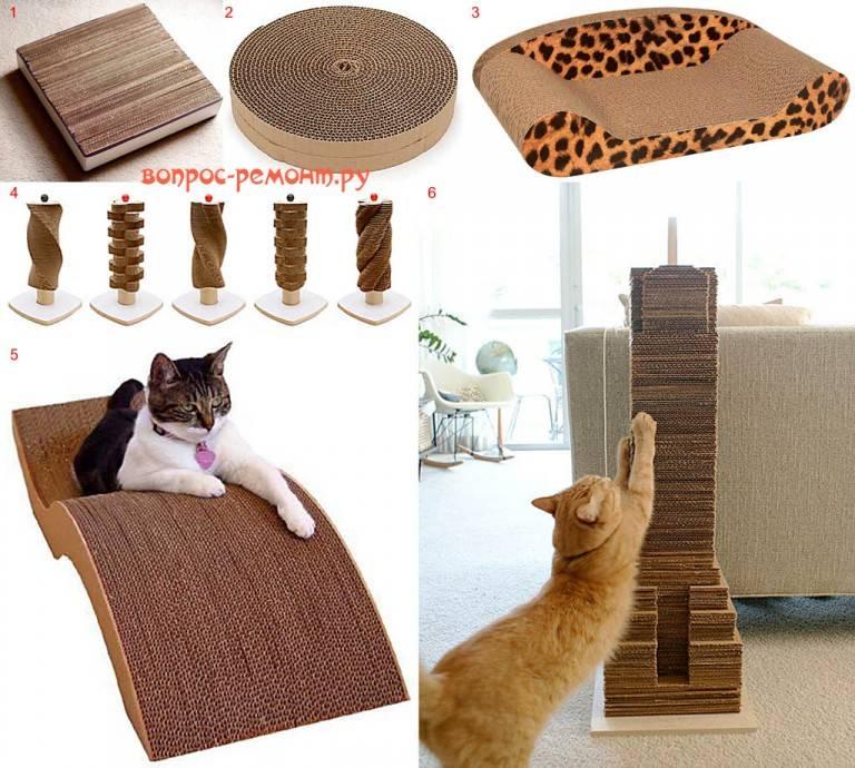 Экзотические домашние животные для квартиры: 10 необычных питомцев