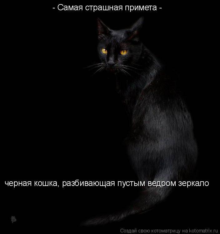 Черный кот: приметы и суеверия, можно ли заводить дома, что будет, если перебежал дорогу