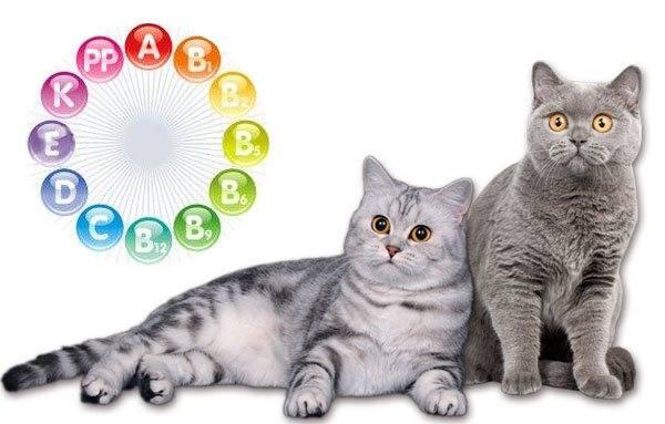 витамины для кошек: какие бывают и как выбрать добавки к питанию вашего питомца