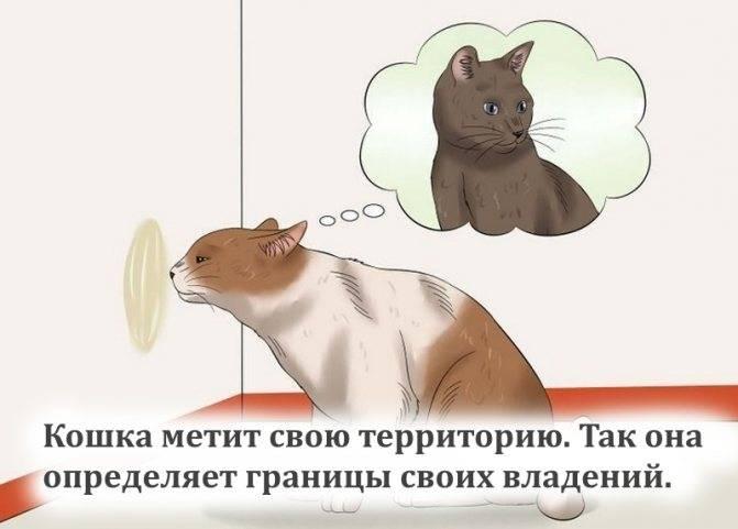 Почему у котов может сильно пахнуть моча: причины вони с аммиаком