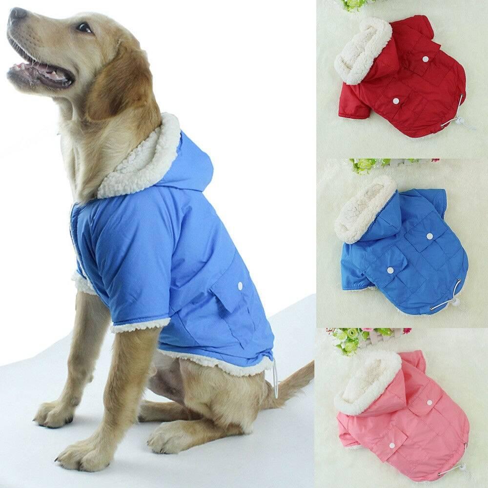 Каким собакам нужна одежда и как ее правильно выбрать?