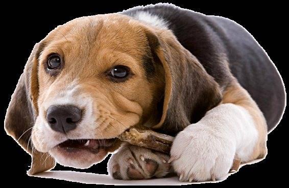 Зрение собаки: как собаки видят в темноте, какие цвета распознают, как проверить зрение - dogtricks.ru