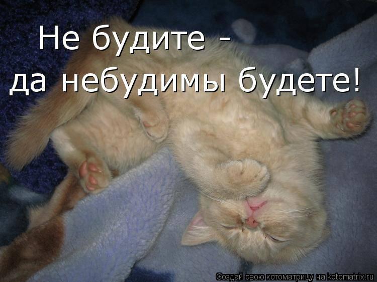 Рекомендации врачей, почему нельзя спать с котами?