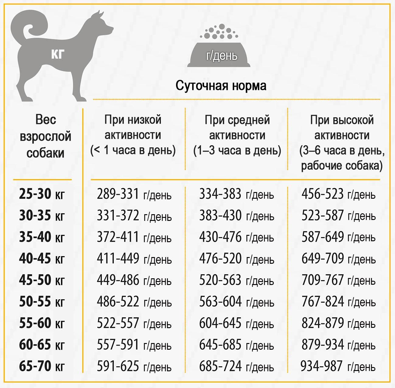 Можно ли собакам давать куриные кости: сырые и вареные, польза и возможный вред