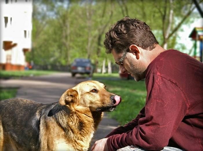 Возвращенцы: как собаки находят дорогу домой за много километров?