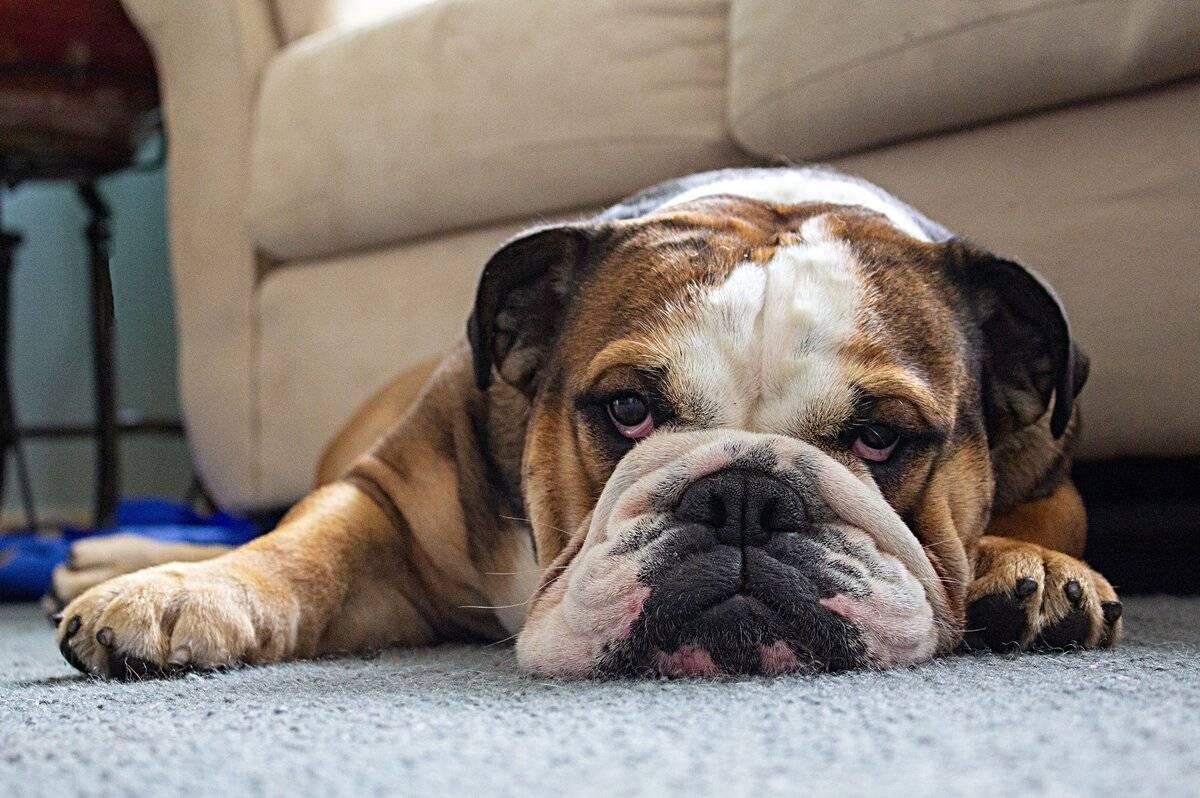 Какие ошибки нельзя допускать в составлении рациона для собаки