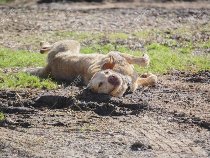 Почему собаки слипаются при спаривании почему собаки слипаются при спаривании