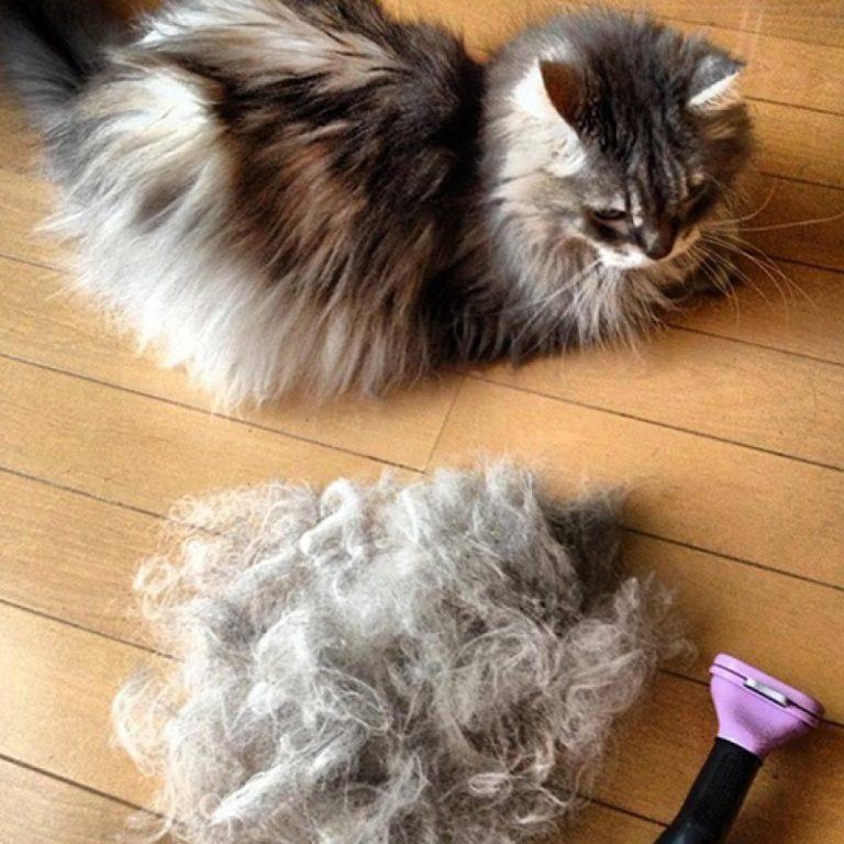 Фурминатор для кошек: расческа и чесалка для длинношерстных пород, как выбрать, как пользоваться и какая цена, а также как работает эта щетка