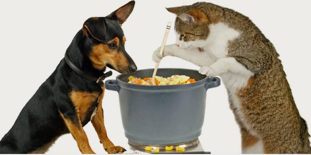 Варианты кормления кошки: сухой и влажный корм вместе, с натуральной едой, и другие