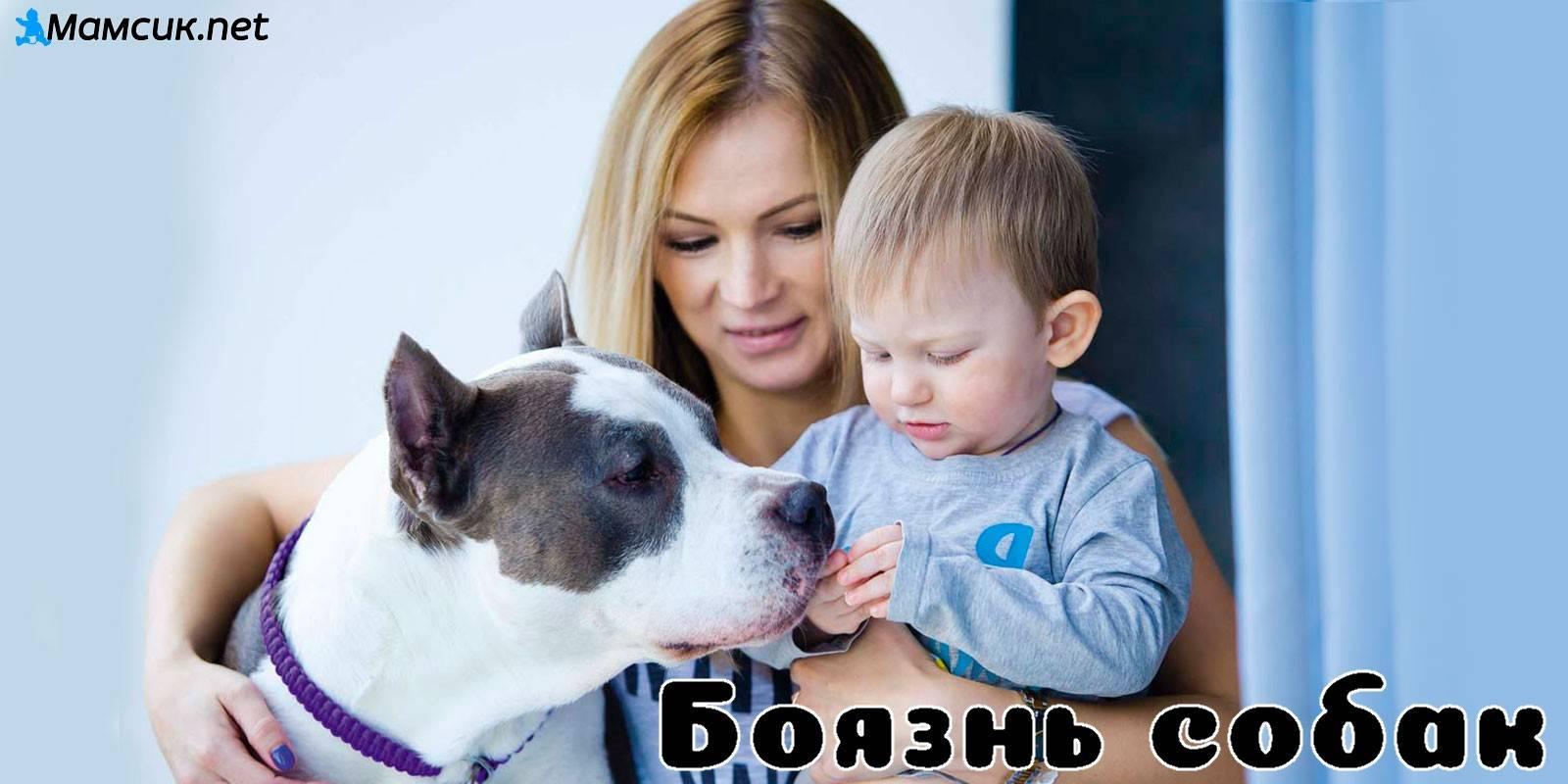Собака кидается на других собак, что делать?