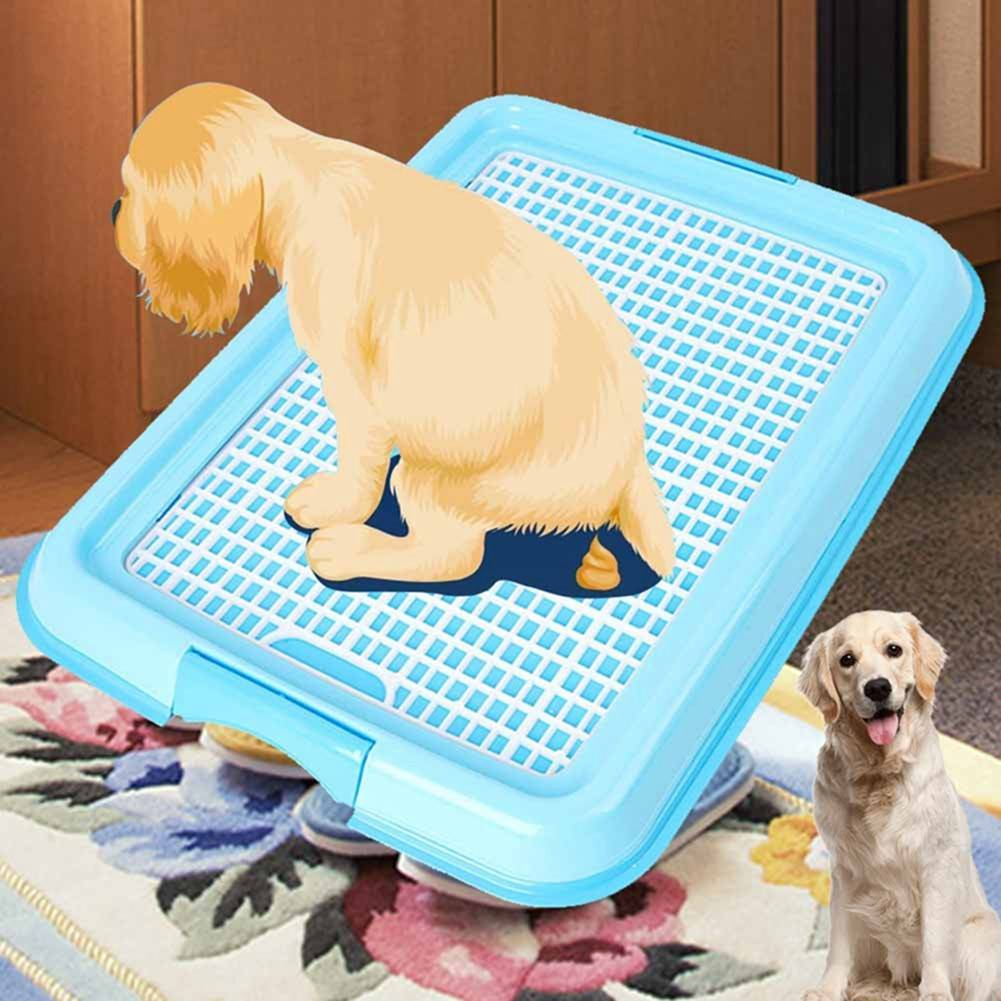 Как приучить собаку ходить в туалет на улице?