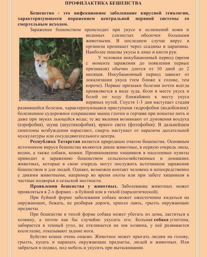 Бешенство у кошки – описание, симптомы, лечение, профилактика