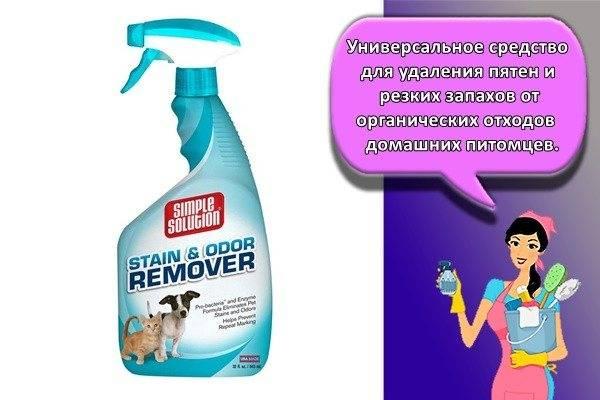 Как избавиться от запаха кошачьей мочи в квартире. кошачий запах чем убрать