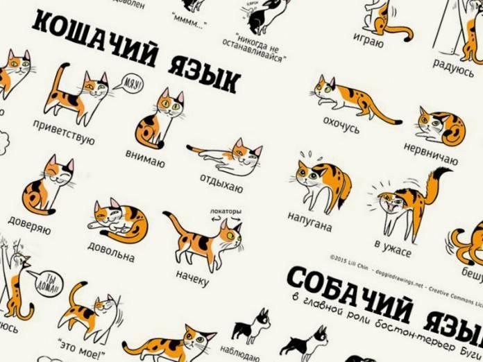 Как общаться со своей кошкой - wikihow