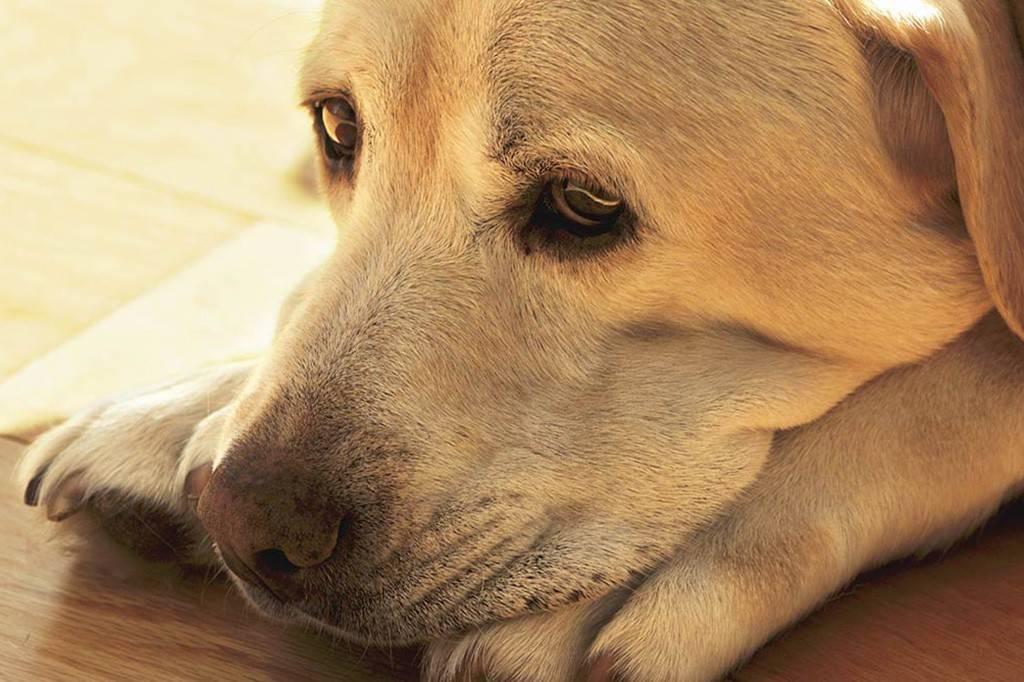 Почему собака скулит? и что с этим делать?