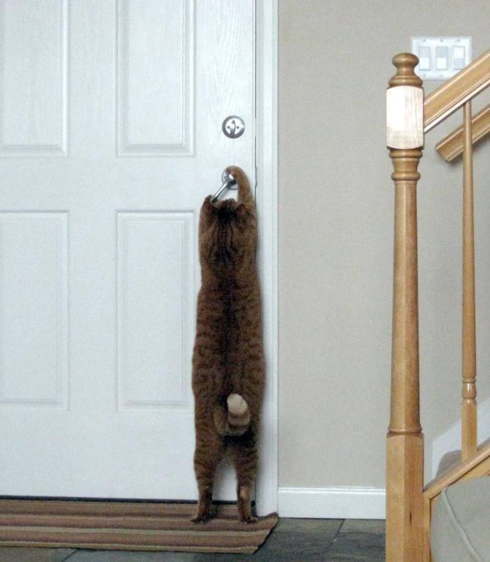 Не закрыл дверь холодильника что будет. почему холодильник нельзя держать долго открытым