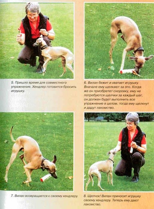 5 способов научить собаку команде «голос»