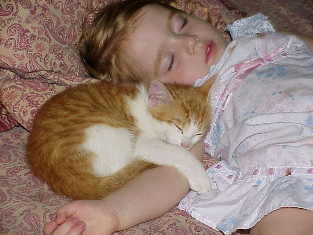 Можно ли отучить кошку будить хозяина по утрам и как это сделать