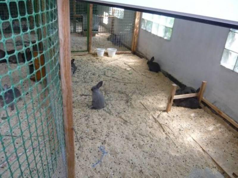 Содержание кроликов в вольерах: плюсы и минусы такого метода   свое хозяйство