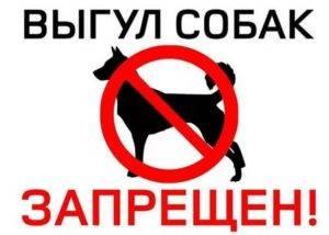 Закон о выгуле собак в 2020 году: правила в россии, штрафы в неположенных местах