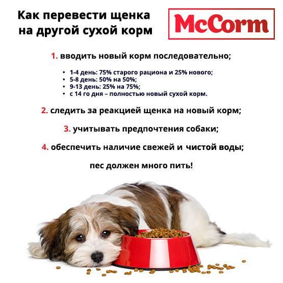 О переводе на сухой корм: как правильно перевести щенка на сухой корм с готовой пищи и как перейти щенку с сырого мяса
