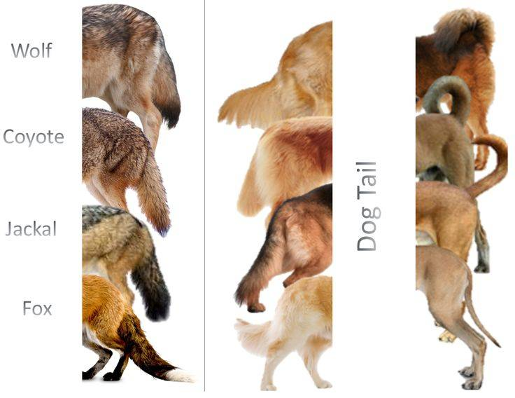 Виды волков. описание, названия и особенности волков