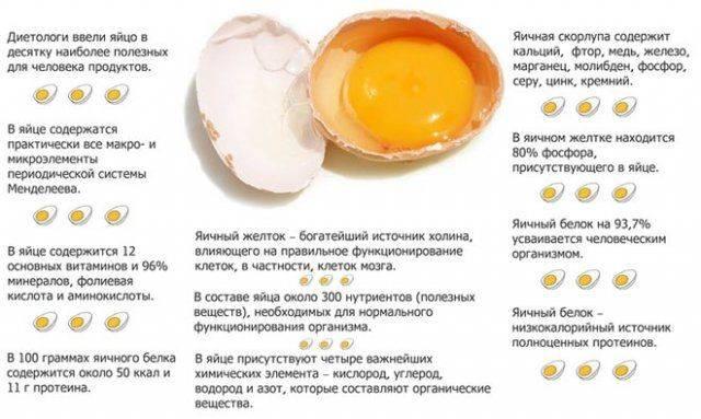 Можно ли давать яйца собаке (сырые и варенные)