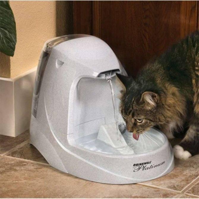 Автоматическая поилка для кошек и собак: умные поилки для животных своими руками