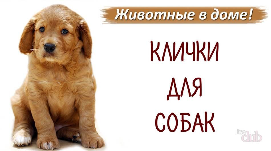 Как назвать йорка девочку: красивые и популярные клички для щенков. - mydognames