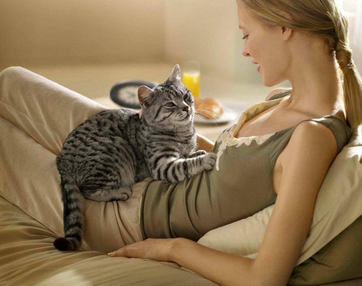 Почему коты и кошки топчут человека и одеяло передними лапками и мурчат