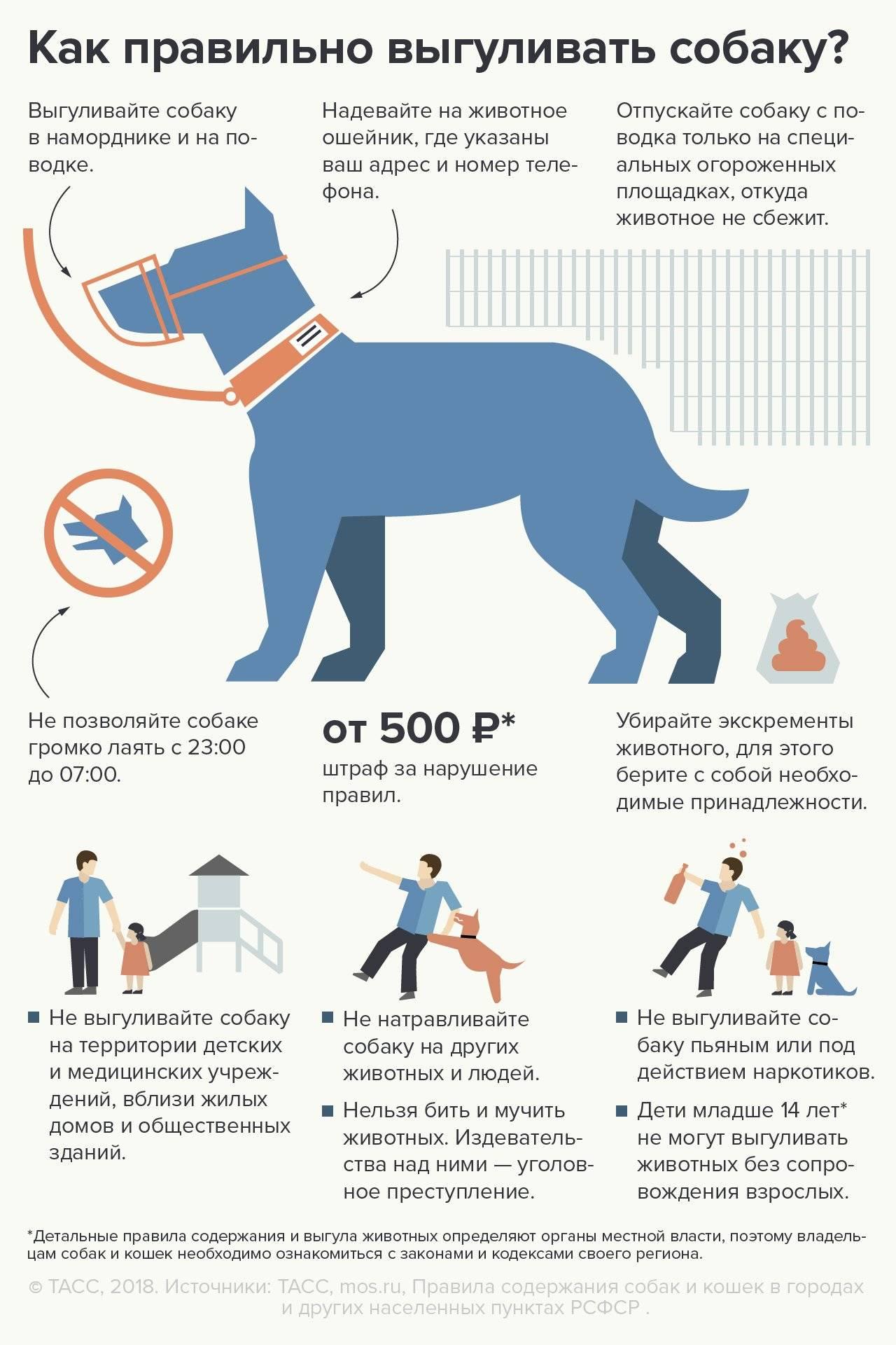 Закон о содержании собак: основные положения