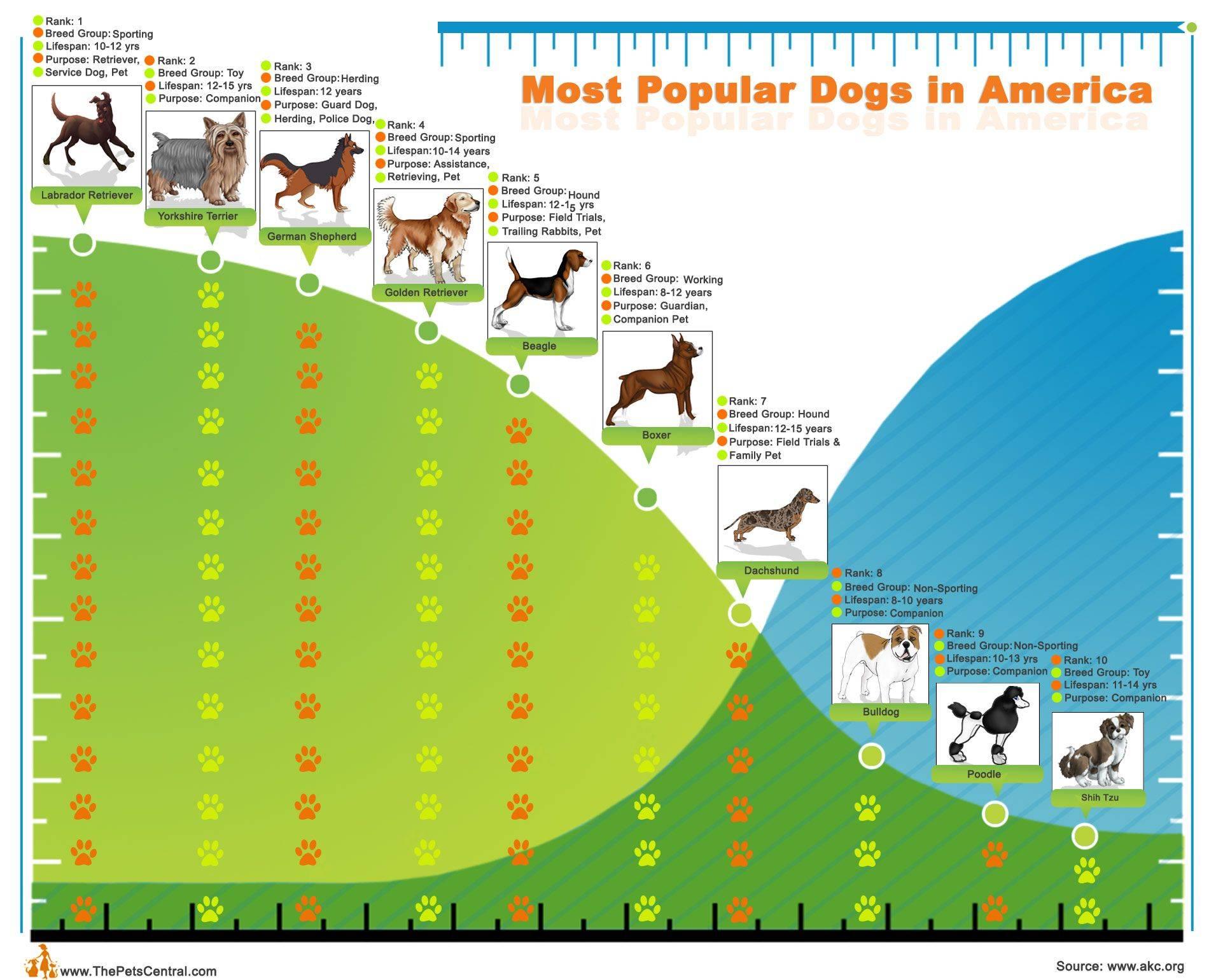 Сколько в мире существует пород собак?