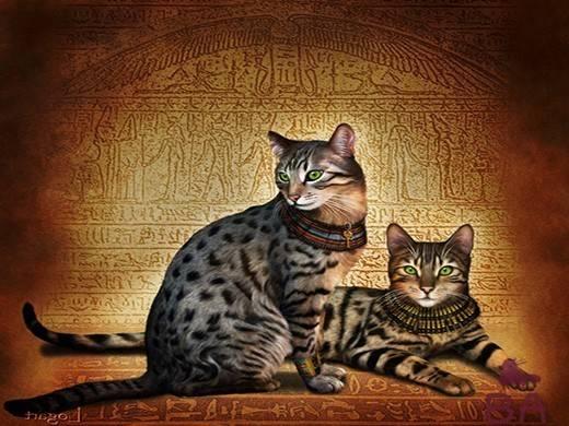 Египетский мау: описание, фото, уход и особенности содержания кошек