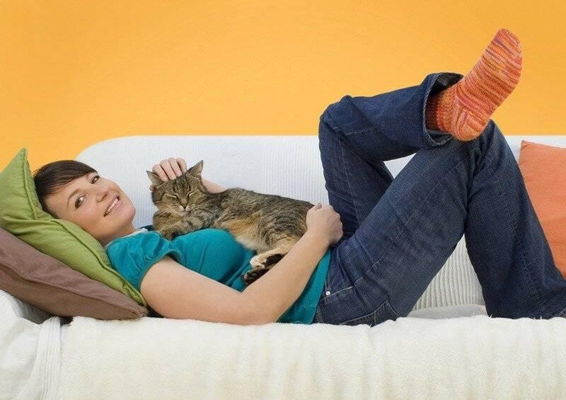 11 удивительных фактов из жизни кошек