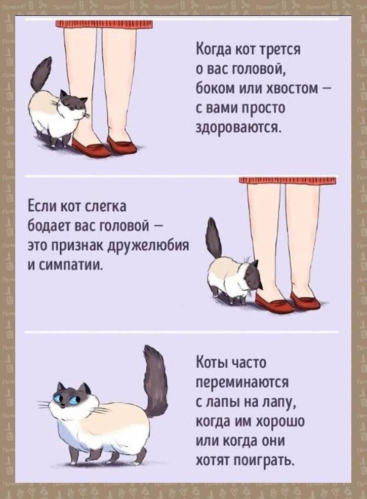 Кошка мурлычет и машет хвостом одновременно. почему коты виляют хвостом: как определить настроение питомца? почему кошки машут хвостом