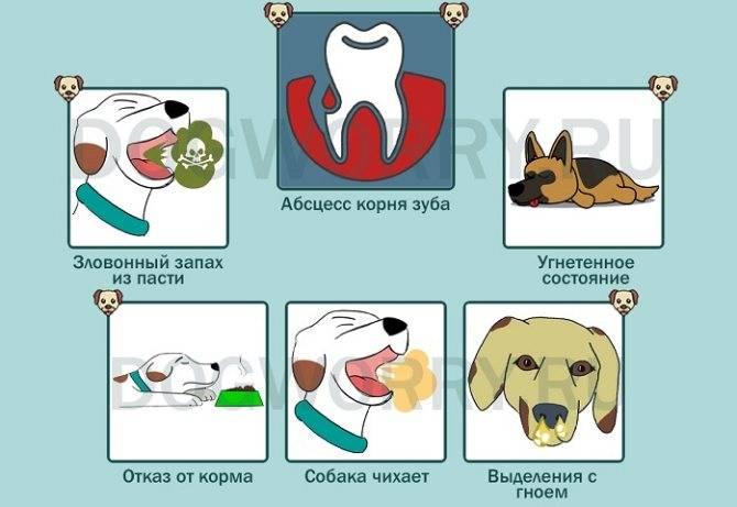 Почему собака чихает и фыркает носом: причины и лечение