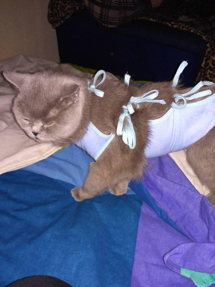 Кошка после стерилизации восстановление: период реабилитации, как можно помочь, сколько дней занимает?