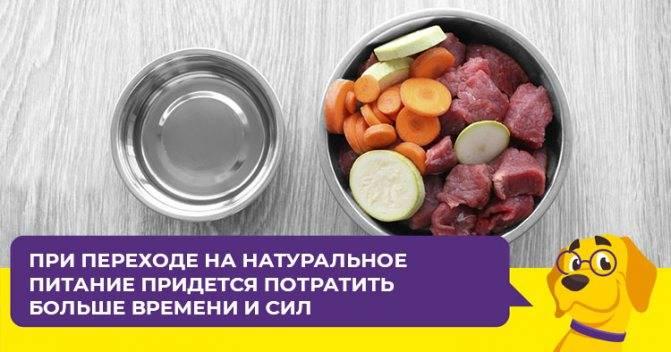 Перевод щенка на сухой корм: правила и рекомендации