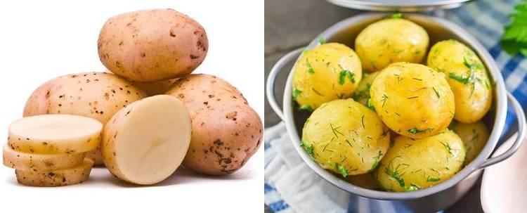 О картошке в питании собак