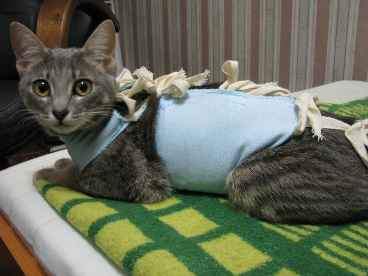 Бандаж для кошки после стерилизации своими руками: как сделать