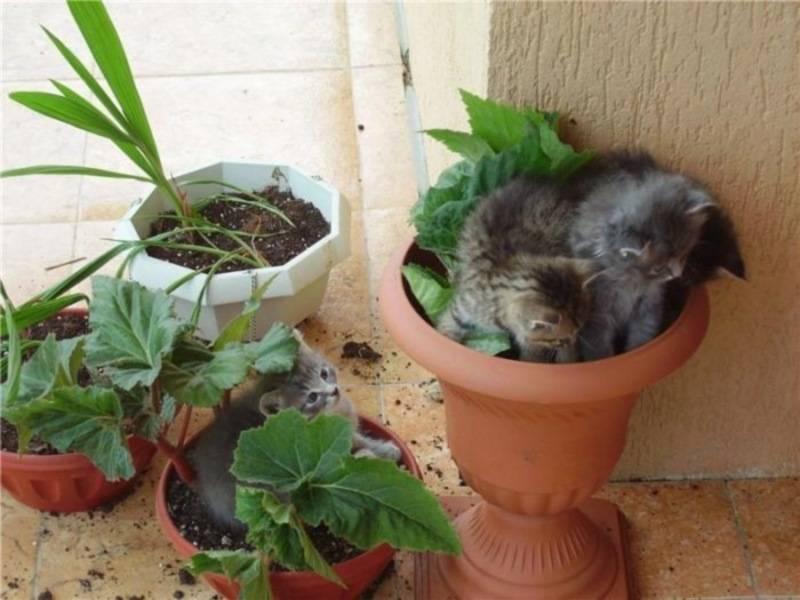Как отучить кошку есть цветы: ? способы и рекомендации