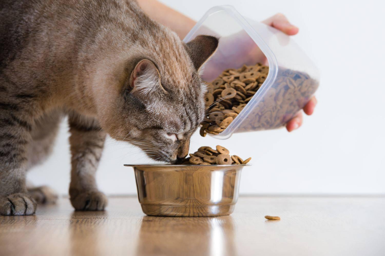 Кошка плохо ест: причины плохого аппетита и что делать?