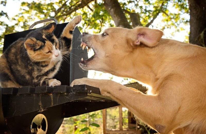 Собака кусает хозяина – что делать при агрессии к знакомым людям
