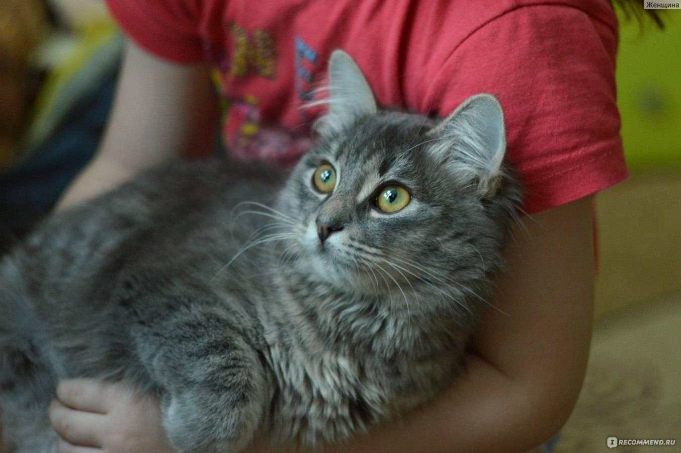 Дворовые породы кошек: почему стоит выбрать именно такого кота. породы дворовых котов: течет ли в беспородных красавцах благородная кровь? как называются беспородные кошки